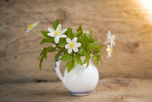 Bush-windröschen, Ranunculaceae, Anemone Nemorosa