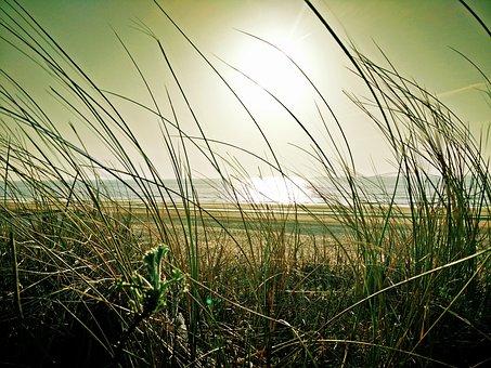 Beach, Marram Grass, Sea, Dune, Sand, Landscape