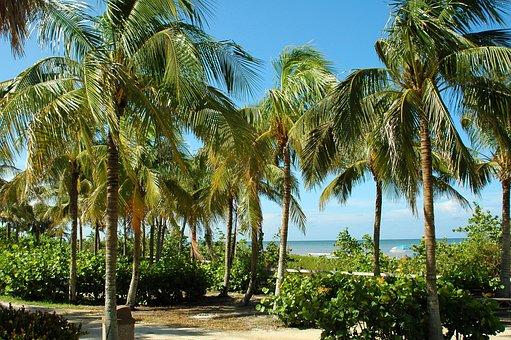 Key West, Florida, Tropical, Beach, Palm Trees, Tourism
