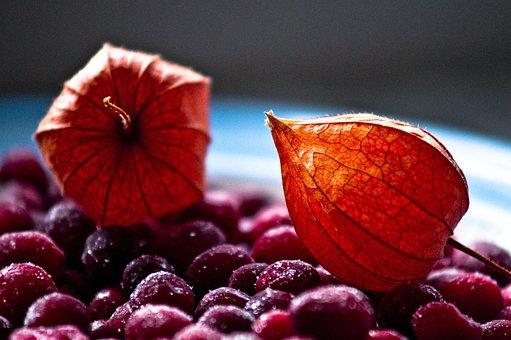 Winter, Cranberry, Tomatillo, Composition, Still Life