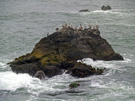 Pelicans, Rock, Water, Pacific, Ocean, Bird, Shoreline