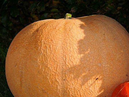 Pumpkin, Colorful, Orange, Huge, Graceful, Autumn