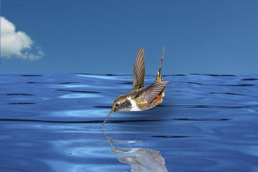 Nature, Bird, Water, Kolibii, Mirroring