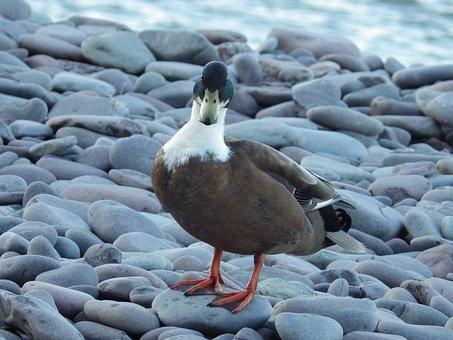 Quacky Duck, On The Beach, Cool