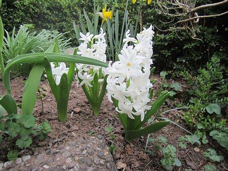 Flower, Nature, Plant, Spring, White, White Blossom