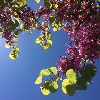 Flowers, Spring, Plant, Branch, Nature, Handsomely, Sky