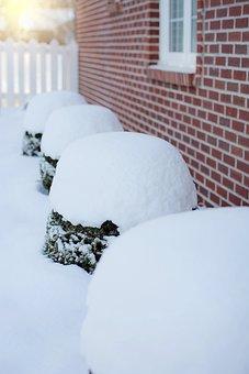 Heavy Snow, Snow, Snow On Bushes, Snowfall, Outdoors