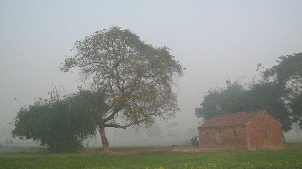 Tree, Fog, Mist, Village, Farmhouse, Nature, Morning
