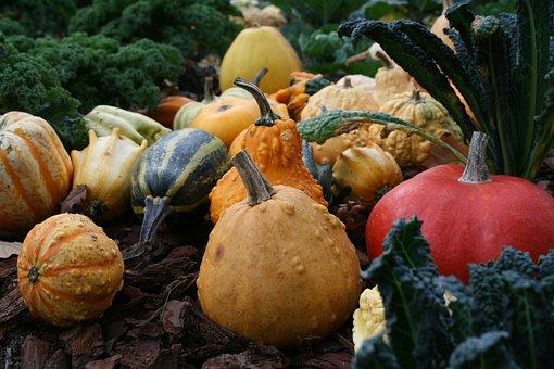 Gourds, Ornamental Gourds, Ornamental Crop