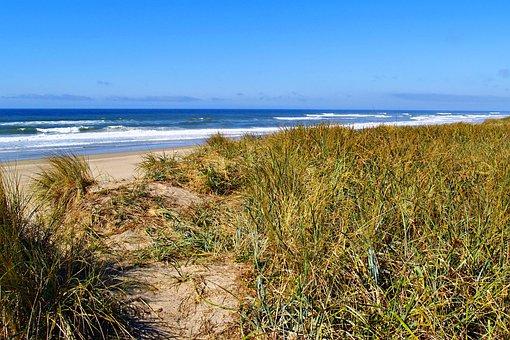 Oregon, Beach, Seashore, Sand Beach, Grass, Water