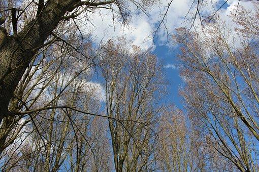 Houplines, Park, Spring