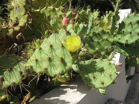 Katus, Blossom, Bloom, Plant, Yellow, Sting