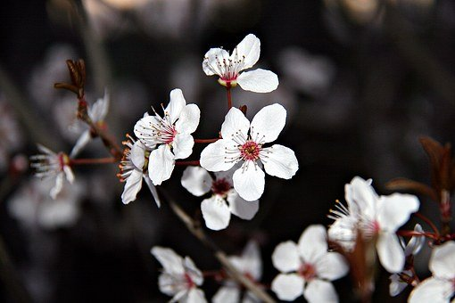 Flowers, Spring, Nature, White, Bloom, Unic