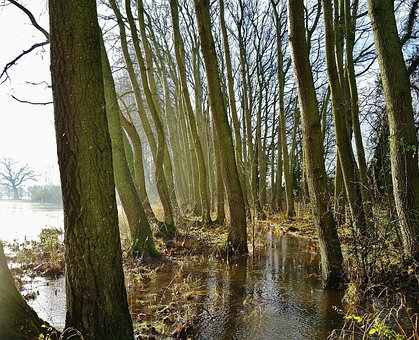 Flooded Forest, Frost, Winter, Fields, Countryside