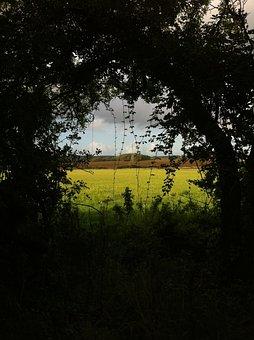Forest, Pasture, Discernment, Nature, Landscape, Green