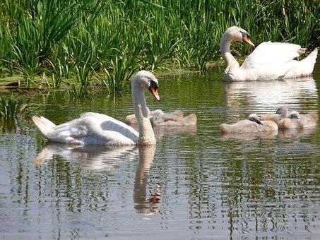 Białobrzegi, Birds, Spring