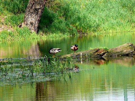 Białobrzegi, Vistas, Birds