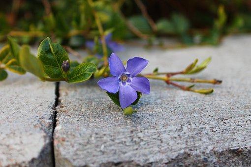 Flower, Purple, Nature, Floral, Spring, Summer, Natural