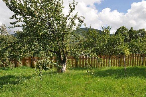 Mountain, Orchard, Ochard, Fence, Spring