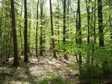 Forest, Maiwald, Spring