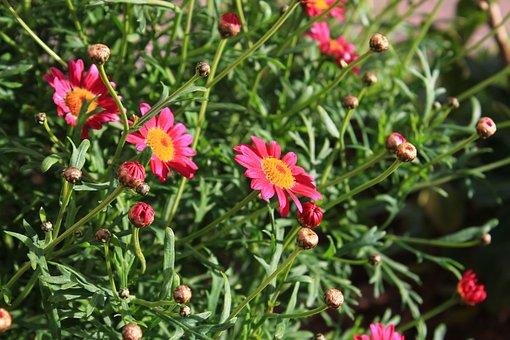 Labisbaldelpenedes, Flowers, Field, Summer, Spring