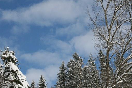 Winter, Sky, Cold, Nature, Trees, White, Winter Trees