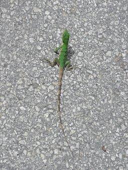 Lizard, Reptile, Green, Asphalt, Amphibian, Tail