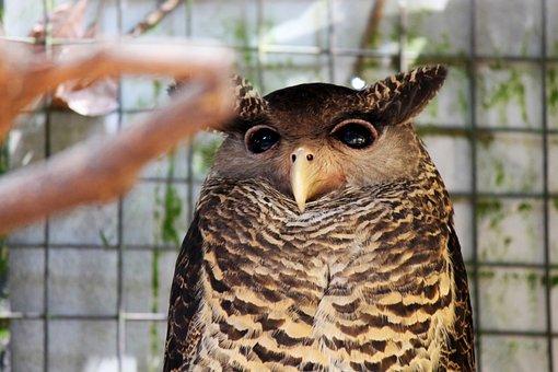 Owl, Eyes, Bird, Fly, Wings, Feather, Wildlife, Beak