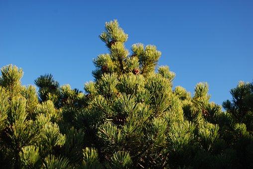 Kosodrzewia, Vegetation, Green