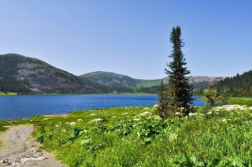 Lake, Field, Grass, Nature, Forest, Ergaki, Summer
