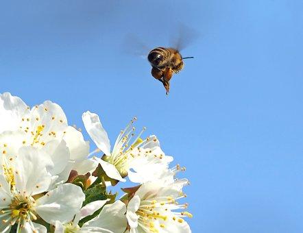 And Bye, Bee, Honey Bee, Flight, Macro, Pollen, Nature