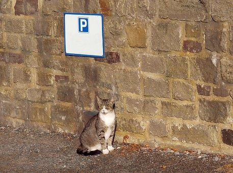 Park And Ride, Cat, Park, Socialized, Good, Wait, Fun