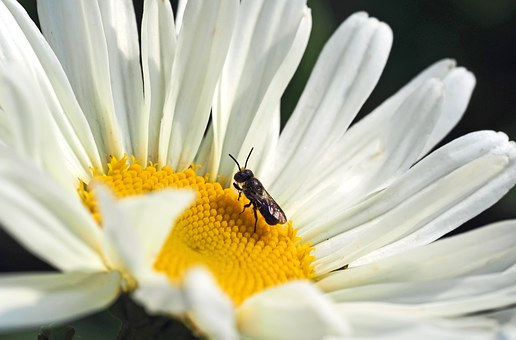 Insect, Plant, Nature