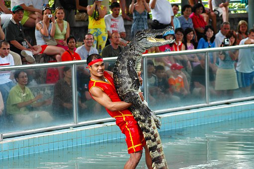 Crocodile Band, Million Year Stone Park, Thailand