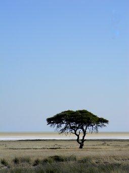 Tree, Africa, Namibia, Desert, Nature, Landscape