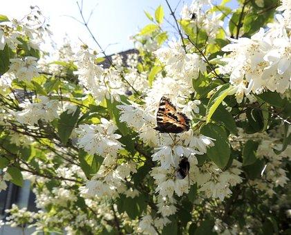 Little Fox, Aglais Urticae, Butterflies, Butterfly