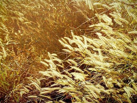 Autumn, Blur, Calm, Change, Concept, Country