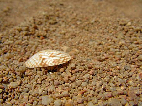 Cockle Shell, Coarse Grained Sand, Sea Shell, Beach
