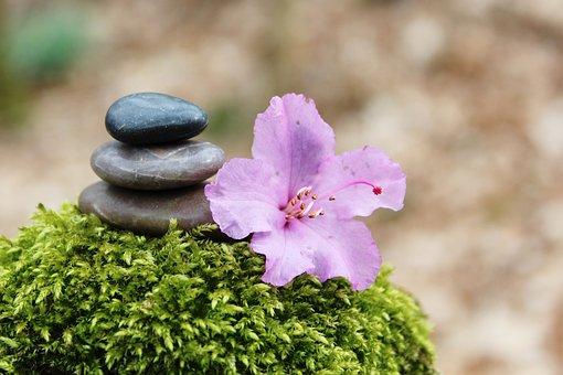 Azalea, Stone Pile, Stack, Stones, Blossom, Bloom, Pink