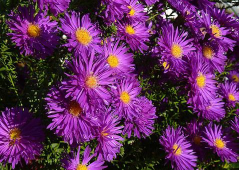 Asters, Balcony, Blue, Bloom, Flowers, Bouquet