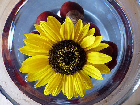 Sun Flower, Flower Colour, Flowers, Yellow, Bouquets