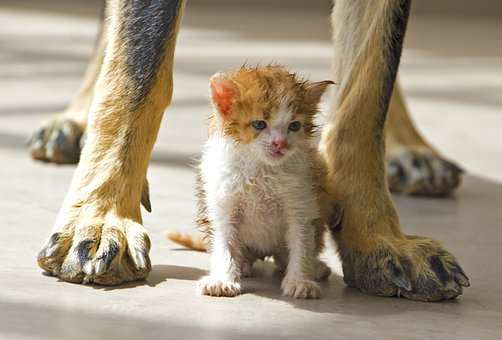 Cat, Dog, Pet, Together, Animals, Cute, Kitten, Young