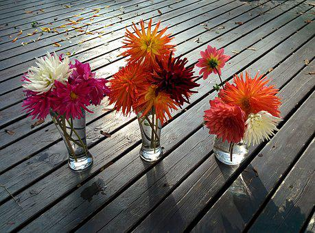 Flowers, Dahlias, Vases, Garden, Pink, Botanical