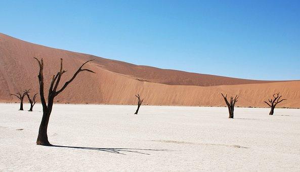 Dune, Desert, Dead Tree, Sand, Ridge, Africa, Namibia