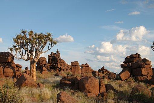 Rock Formations, Rocks, Dichotoma, Aloe, Tree, Exotic