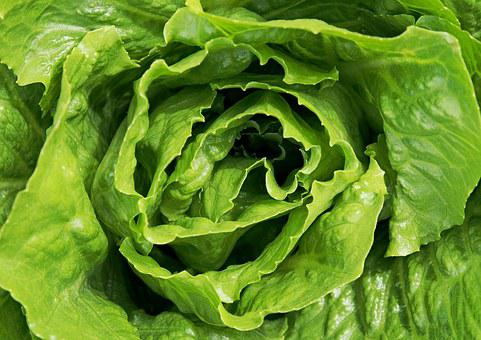 Lettuce, Salad, Leaves, Leaf, Green, Healthy, Food