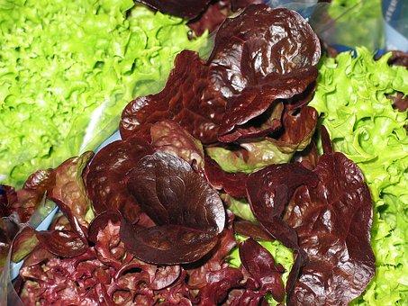 Salad, Lettuce Leaves, Garden, Eat, Frisch