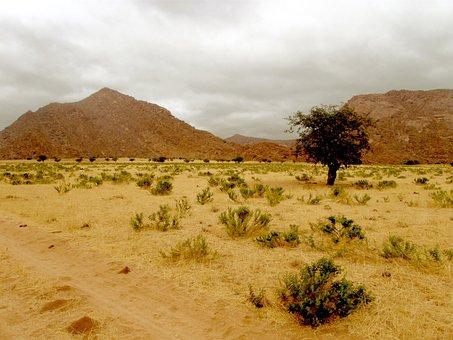 Desert, Hill, Rocks, Tree, Lonely, Barren, Bare