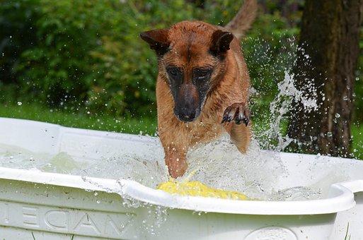 Dog Pool, Dog Swimming Pool, Malinois, Crazy Egg