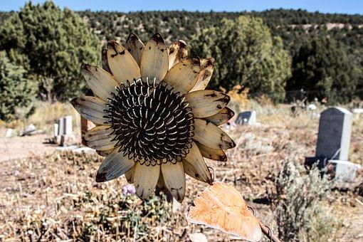 Cemetery, Sunflower, Metal, Grave, Graveyard